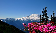 Mount Rainier Seen From Crystal Mountain Summit  2 Print by Tanya  Searcy