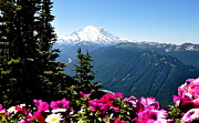 Crystall Posters - Mount Rainier Seen from Crystal Mountain Summit  5 Poster by Tanya  Searcy