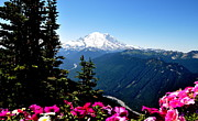 Crystall Posters - Mount Rainier Seen from Crystal Mountain Summit  6 Poster by Tanya  Searcy