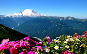 Crystall Posters - Mount Rainier Seen from Crystal Mountain Summit Poster by Tanya  Searcy