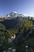 Mt Rainier National Park Art - Mount Rainier Surrounded By Forest by Konrad Wothe