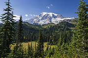 Mt Rainier National Park Art - Mount Rainier With Coniferous Forest by Konrad Wothe