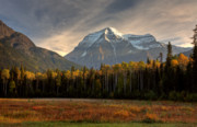 Snow Scene Digital Art Framed Prints - Mount Robson in autumn Framed Print by Mark Duffy