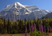 Robert Pilkington - Mount Robson