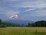 Mount Shasta Photos - Mount Shasta by Donna Blackhall