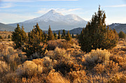 Fall Grass Prints - Mount Shasta in the Fall  Print by Gary Whitton