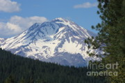 Mount Shasta Photos - Mount Shasta Scenic by Carol Groenen