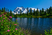 Highwood Lake Posters - Mount Shuksan and Highwood Lake Poster by Dan Mihai