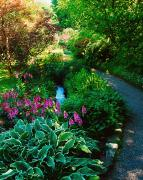 Beautiful Creek Metal Prints - Mount Usher Gardens, Co Wicklow Metal Print by The Irish Image Collection