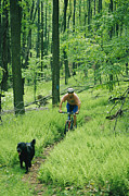 Forbes Prints - Mountain Biker And Dog On Single Track Print by Skip Brown