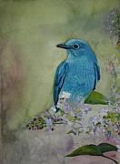 Bluebird Painting Originals - Mountain Bluebird by Betty-Anne McDonald