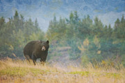 Canadian Art Prints - Mountain Boar Print by Roberta Murray