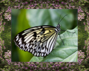 Blooms  Butterflies Photo Framed Prints - Mountain Butterfly Framed Print by Bell And Todd