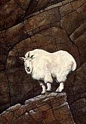 Mountain Goat Painting Prints - Mountain Goat Print by Frank Wilson