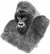 Gorilla Drawings - Mountain Gorilla by Rosanna Maria