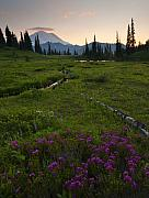 Rainier Prints - Mountain Heather Sunset Print by Mike  Dawson