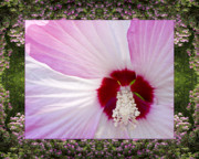 Flower Photos Framed Prints - Mountain Hibiscus Framed Print by Bell And Todd