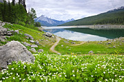 Alberta Landscape Framed Prints - Mountain lake in Jasper National Park Canada Framed Print by Elena Elisseeva