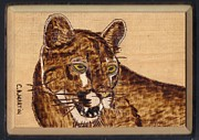 Mountain Lion Pyrography Prints - Mountain Lion Print by Clarence Butch Martin