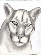 Business Cards Drawings Posters - Mountain Lion Poster by Rick Hill