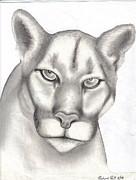 Mountain Lion Print by Rick Hill