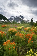 Indian Paintbrush Prints - Mountain Meadow, Canada Print by David Nunuk