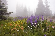 Dewdrops Prints - Mountain Meadow In The Mist Print by Bob Gibbons