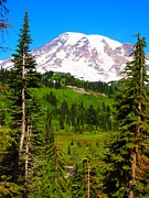 Mt Rainier Stream Framed Prints - Mountain Meadow Framed Print by Jim Moore