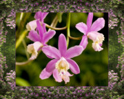 Flower Photos Framed Prints - Mountain Orchids Framed Print by Bell And Todd
