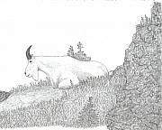 Mountain Goat Drawings - Mountain Solace by Chad Hinckley