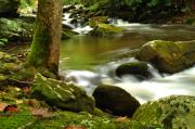 Mountain Photographs Prints - Mountain Stream 2 Print by William Jones