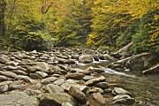 Smokey Mountains Prints - Mountain Stream  6058 Print by Michael Peychich