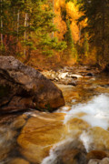 Pines Framed Prints - Mountain Stream in Autumn Framed Print by Utah Images