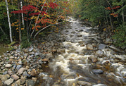 Creeks Art - Mountain Stream In Autumn, White by Medford Taylor