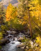 Sierras Photos - Mountain Stream by Mark Wilburn