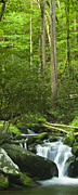 Tennessee Metal Prints - Mountain Stream Panorama Metal Print by Andrew Soundarajan