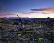 Lemhi Mountains Posters - Mountain Sunset Poster by Leland Howard
