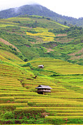 Hut Prints - Mountainous Rice Field Print by Akari Photography