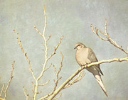 Cindy Garber Iverson - Mourning dove in winter