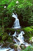 Gsmnp Photos - Mouse Creek Falls Summer by Alan Lenk