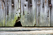 Entrance Door Photos - Mouse Hole by Olivier Le Queinec