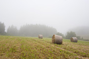 Foggy Day Prints - Mown Grass Print by Michal Boubin