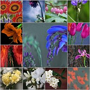 Flowers Photographs Prints - MPrints - Mosaic Print by M  Stuart
