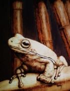 Amphibians Pyrography Framed Prints - Mr. Frog Framed Print by Freddy  Smith