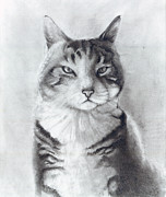 Tabby Art - Mr. Silky by CarrieAnn Reda