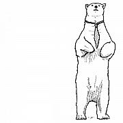Polar Drawings Prints - Mr. Stemke - The Polar Bear Print by Karl Addison