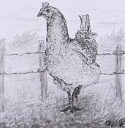 Barn Yard Drawings Framed Prints - Mrs. Hen Framed Print by Quwatha Valentine
