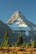 Assiniboine Art - Mt Assiniboine, Canadian Rockies by Schafer & Hill