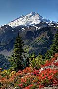 Autumn Color Framed Prints - Mt. Baker Autumn Framed Print by Winston Rockwell