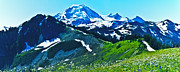 Cascade Mountains Prints - Mt Baker from the Skyline Ridge Trail Print by Alvin Kroon